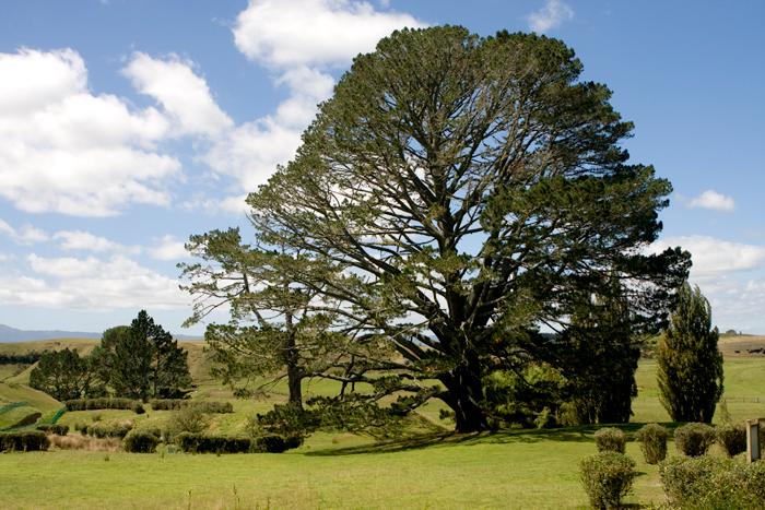 blog_2010_NZ_1-16