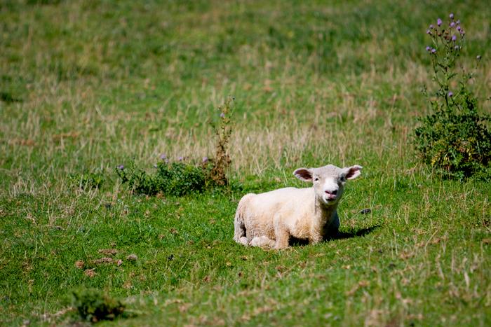 blog_2010_NZ_1-18